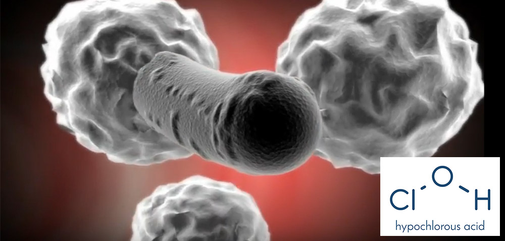 Human immune system uses chlorine bleach active ingredient to kill bacteria